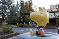 Snoopy 2017 - Random Photos-1