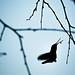 Hummingbird V. Spider