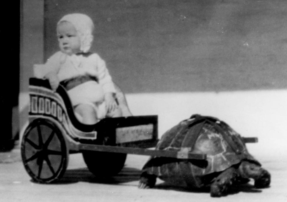 Baby in a replica Roman chariot being pulled by a tortoise