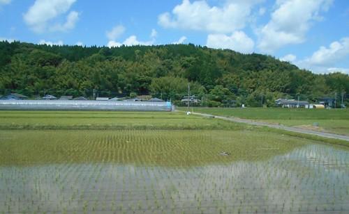 jp-Aoshima-Saitobaru (3)
