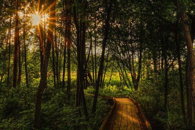 Follow the Sun, Canon EOS 60D, Sigma 18-35mm f/1.8 DC HSM