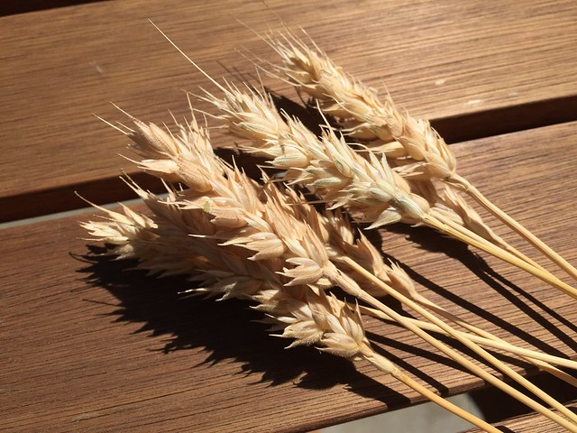 Sonora wheat and...