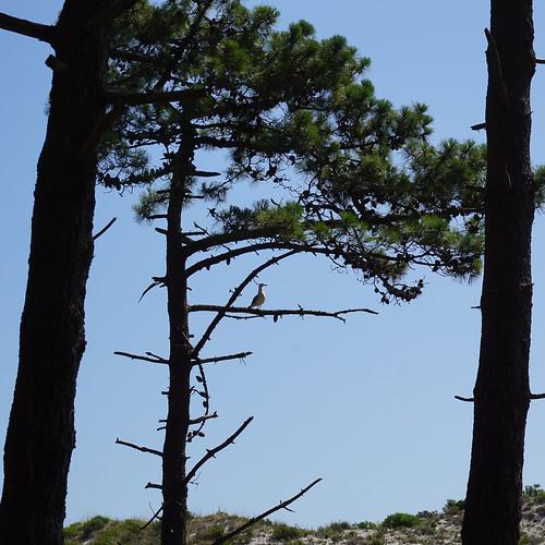 foto Ilhas Cies - Vigo junho'17 09