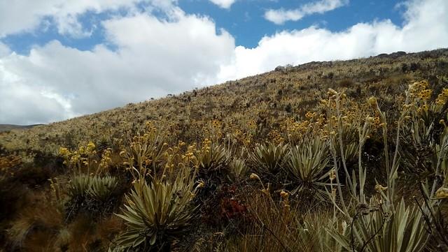 Sibaté: Caminata EcoEspiritual