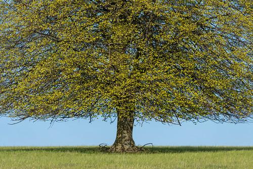 022_Flickr Landschaft.jpg