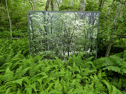 nature mirror view reflection ferns trees inner sanctum illusion