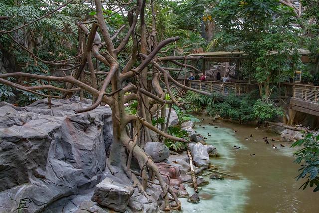 Tropics Trail
