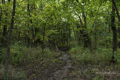 Mockingbird Nature Park
