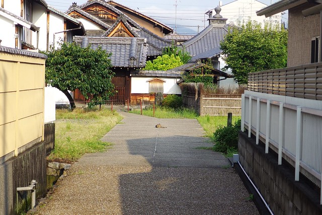 Today's Cat@2017-07-23