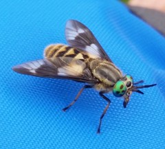 Insects & Invertebrates