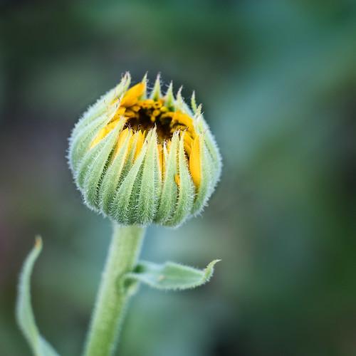 Wildflower-3244
