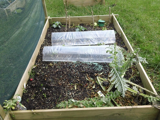 Storm damaged vege garden