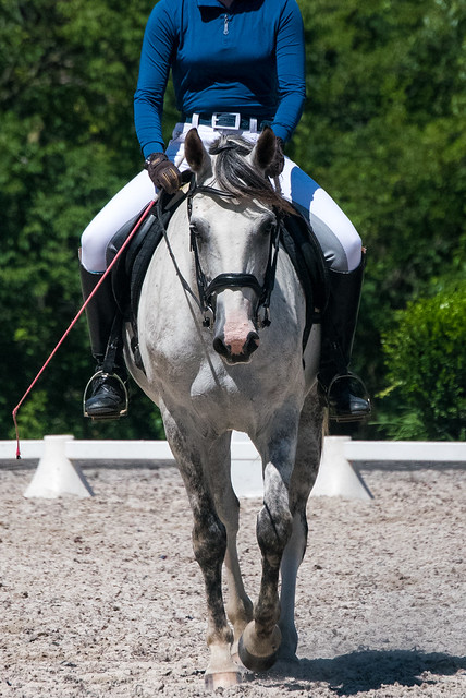 20170709 Grif Dressage Tests-35