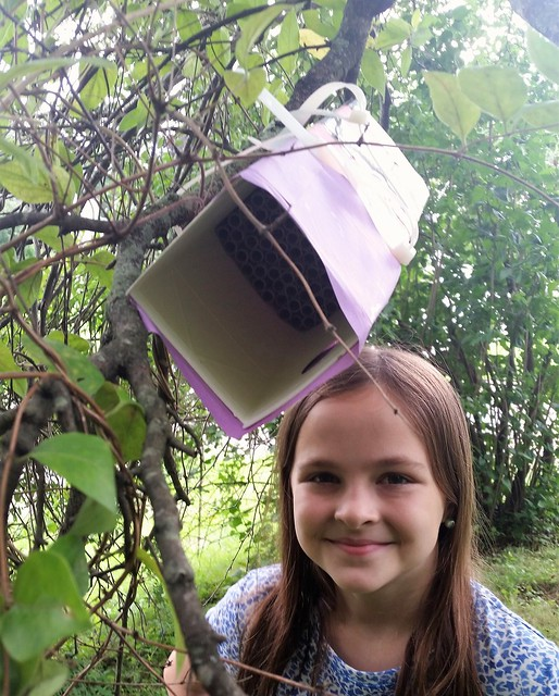 #CampSci Pollinator Week Bee House