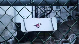 Waverly Bird