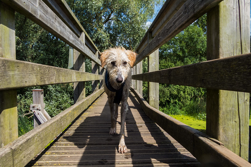 Teddy ventures onto Eye Bridge