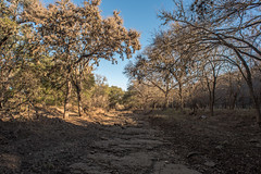 Creek Bed - O.P. Schnabel Park - San Antonio - Texas - 29 January 2017