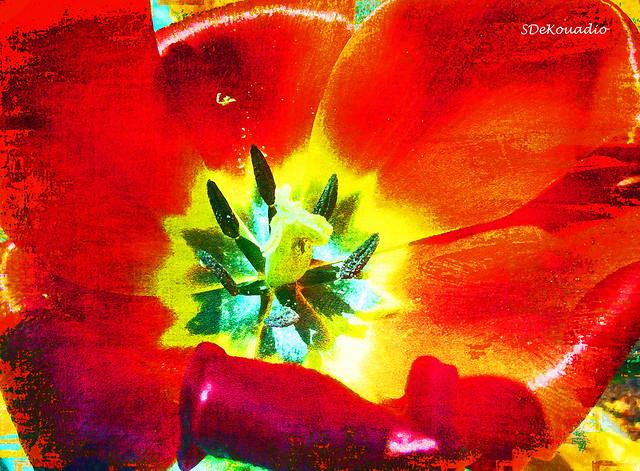 Red Tulip, Canon POWERSHOT ELPH 135