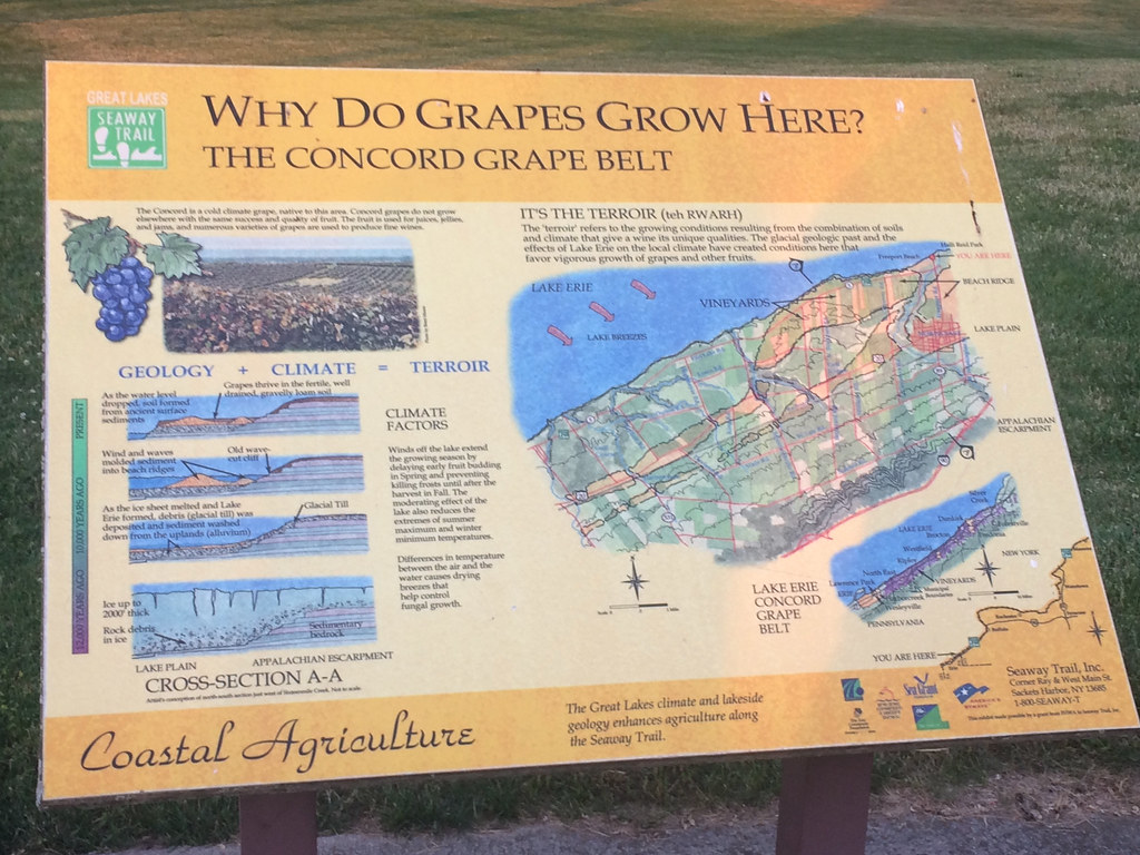The Concord Grape Belt, Lake Erie Wine Country 1