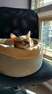 Roxy nap