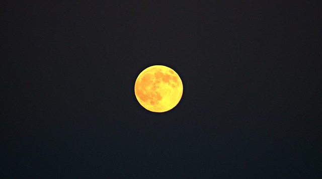 Mooning Over my Garden