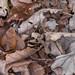 copperhead left corner 20 day