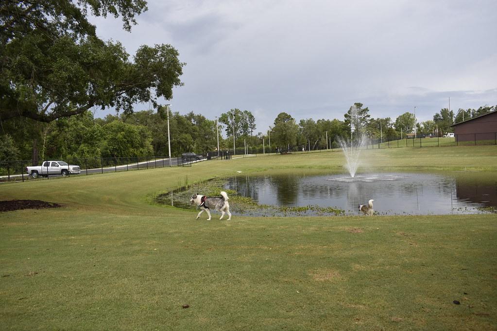 Palm Coast Dog Park