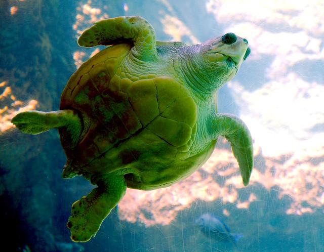 Sea Turtle_4