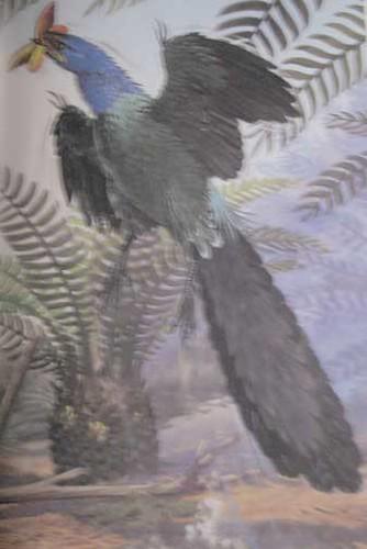 Rourke Prehistoric Animal Books: Archaeopteryx