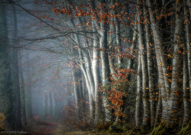 Forest atmosphere!
