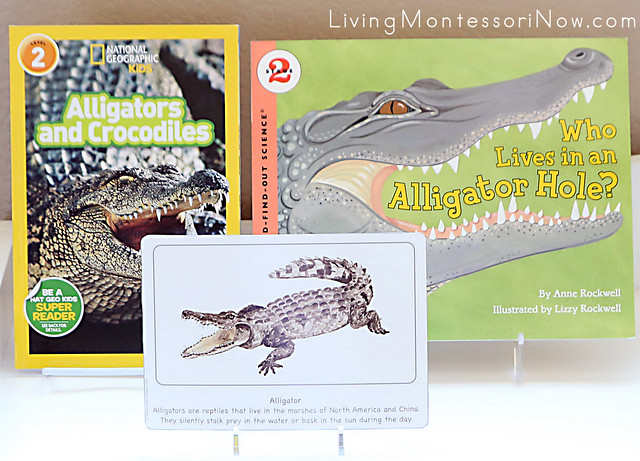 Alligator Culture Card with Alligator Books
