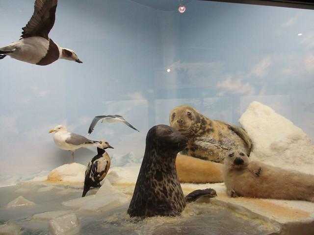 loodusmuuseum 4