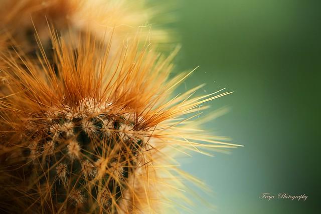 Spiky...