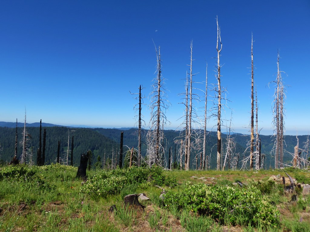 View from Chucksney Mountain Trail