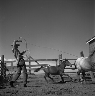 Jim Wyatt ropes a horse in a corral / Jim Wyatt prenant un cheval au lasso dans un corral
