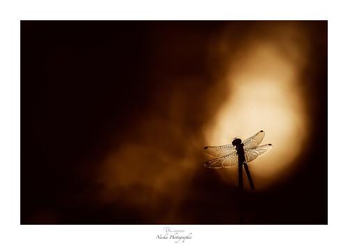 Les ailes de l'enfer