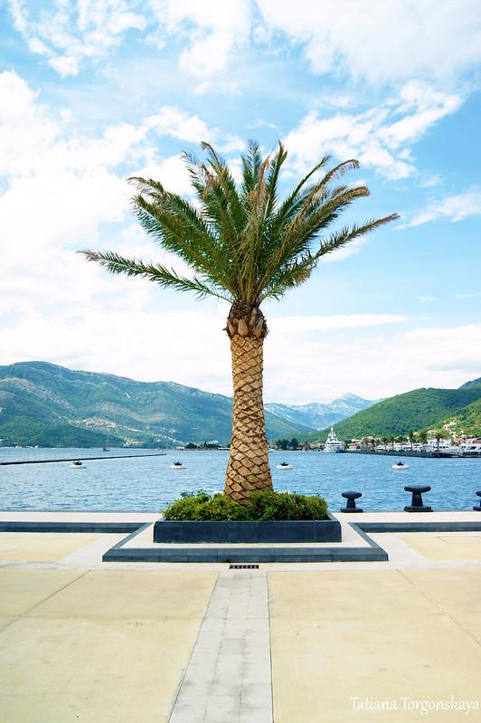 Пальма на пристани