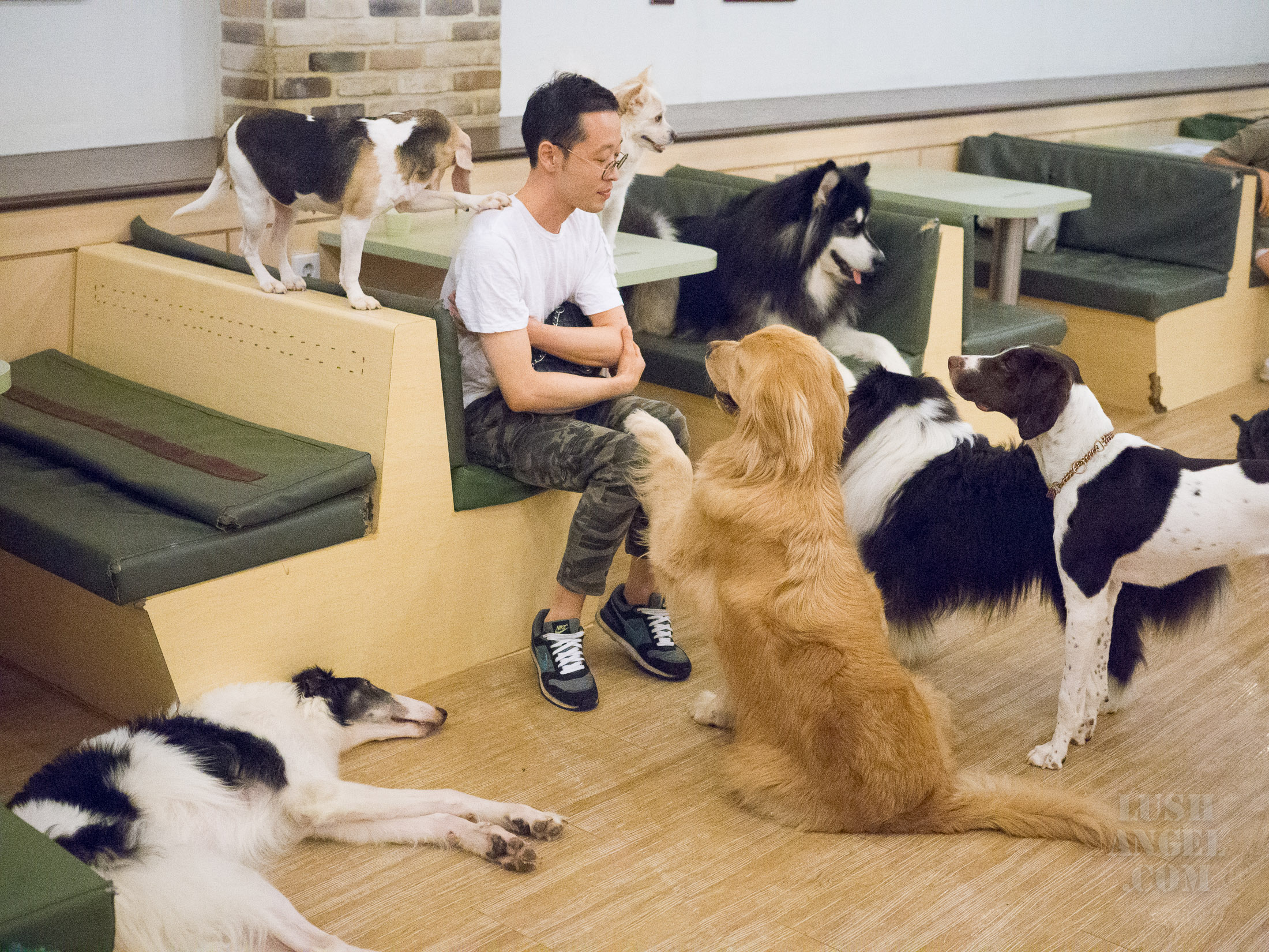 dog-cafe-korea