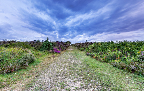 newforest slufters heather path cloud landscape