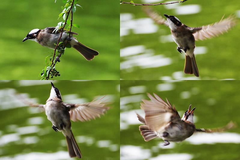 快樂鳥日子