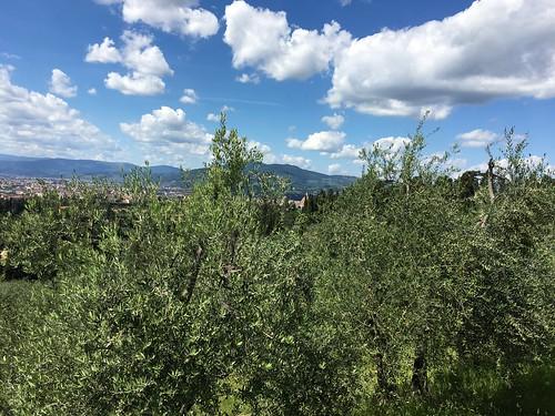 Florence IMG_4676