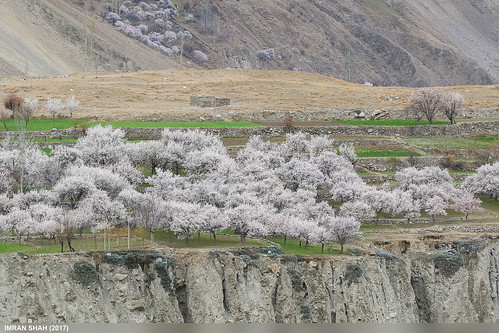 aliabad elements fields gilgitbaltistan greenery hunza landscape location pakistan rocks tele trees vegetation