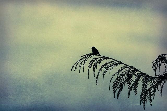 A place of quietness
