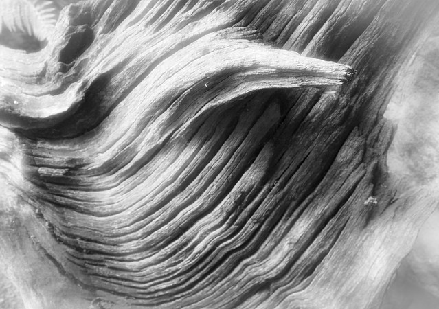 stumpery swirl