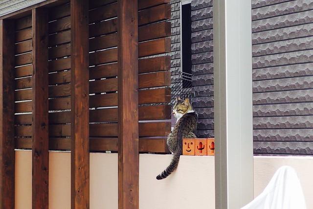 Today's Cat@2017-07-12