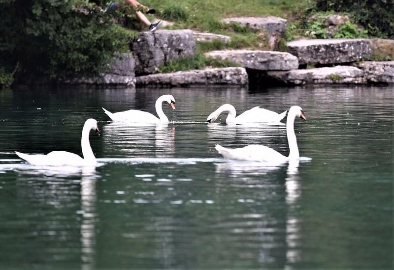 Swans 13.07 (11)
