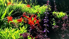 New York Botanical Garden XXXVI