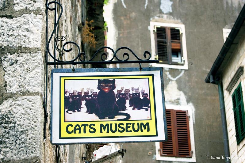 Вывеска Музея кошек