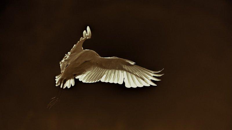 bien-choisir-un-affut-flottant-amar-guillen-photographe-09
