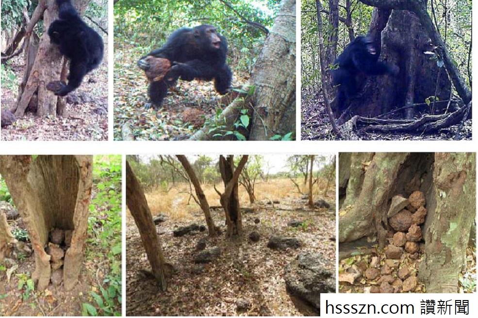 chimp stone 00